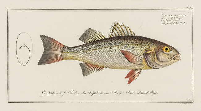 Natural History and Anatomy.- A large mixed group of prints, approximately...