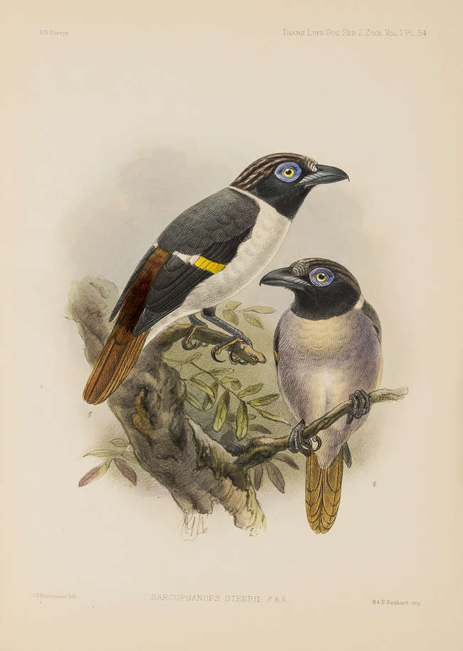 Sharpe (Richard Bowdler) On the Birds Collected by Professor J.B. Steere in...