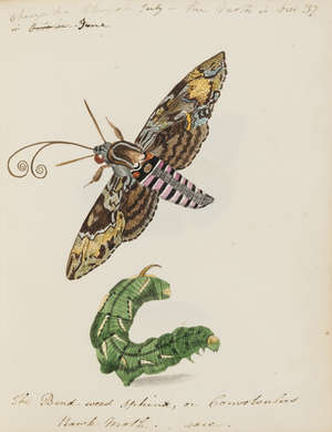 149  Butterflies and moths.- English School (c.1820-1830) An album of butterflies, moths, and other insects, [circa 1820-1830]