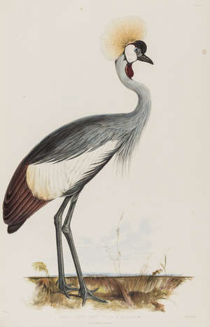 273  Lear (Edward).- [Gray (John Edward)] Gleanings from the Menagerie and Aviary at Knowsley Hall, 1846.
