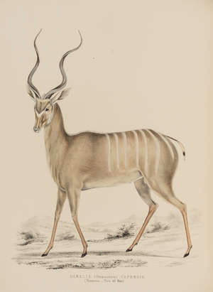 16