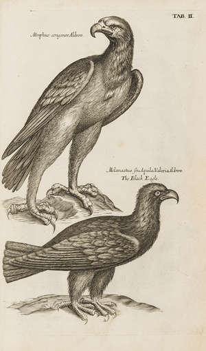 70  Birds.- Willughby (Francis) The Ornithology..., first edition in English, 80 engraved plates, by A. C. for John Martyn, 1678.